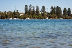 The river (.Stephen..Brennan.) Tags: da70 eastfremantle pentax pentaxk3 swanriver trees perth westernaustralia australia au 70mm