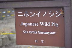 八木山動物公園(仙台市)20190210 (tsukunepapa) Tags: 八木山動物公園 イノシシ