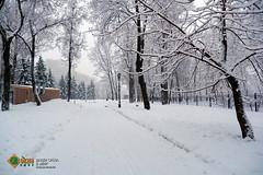 Заснеженная дорожка в парке Останкино (SVOknaVDNH) Tags: снег зима снегопад паркостанкино дорожка москва деревья город пейзаж snow winter snowfall ostankinopark path moscow thetrees city landscape worldbestnature russiaig russiapics lovesunitedrussia natgeoru fujifilmxa5 russiafotolovers фото фотография photo