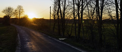 Say Hello to Spring (Michael Heichler) Tags: spring frühling 2019 feburar coesfeld münsterland warm sonne wolkenlos bäume land landscape