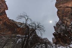 Wintry Zion (CraDorPhoto) Tags: canon5dsr landscape cliffs mountains zion hazy cloudy outdoors nature arizona usa