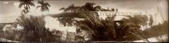 Gator Land Pano VD (efo) Tags: bw livealligators gatorland florida altprocess vandyke brownprint selenium panoramic print handmade film mysteriouscamera homemadecamera