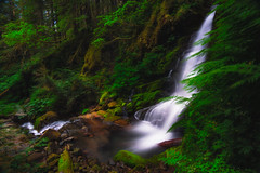Little Skate Falls II (PNW-Photography) Tags: waterfalls waterscape waterfall water washington packwood pacificnorthwest northwest mountain mountains forest trees green creek river stream sony sonya6000 rokinon rokinon12mm