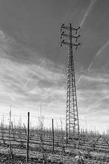Power (enneafive) Tags: highvoltage pylon plantation sky trees wires monochrome clouds fujifilm xt2 affinityphoto plane