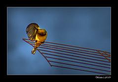 Grooming (VERODAR) Tags: bird wildlife wildbirds sky morning morninglight morningsky nikon verodar veronicasridar