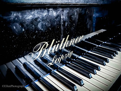 After the choir rehearsale (Fay2603) Tags: klavier piano grandpiano music musik klavierspiel schwarz weis ´tasten klasivertastatur klaviertasten pianokeys hochgalnz fingerspuren prints schwarzweis hobby