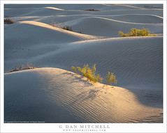 Dunes, Creosote, Sunrise Light (G Dan Mitchell) Tags: creosote bush plant blossom flowering shadow sand dunes mesquite sunrise light morning nature landscape desert undulating deathvalley national park california usa north america