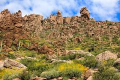 Wildflower Hillside (Buck--Fever) Tags: oldus60 arizonawildflowers wildflowers arizona arizonaskies arizonadesert arizonawonders landscape nature superiorarizona queencreekcanyon saguaro cactussaguaro cactuscanon 60 dtamron 18 400 lensbouldersrocksmountaincentral