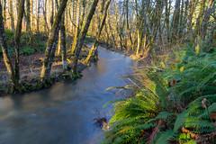 Wolf Creek ferns (Mike_100) Tags: ferns trees creek stream wolfcreek oregon northwest pacificnorthwest