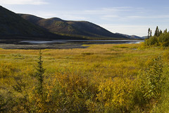 Alaska beauty (JR-pharma) Tags: alaska usa united october northwest north west automne fall states america roadtrip road trip photoroadtrip hiking hike 2015 french français nature aventure liberty liberté canoneos6d canon6d mark 1 canon eos 6d classic jrpharma daltonhighway dalton highway haul wiseman marioncreek marioncreekcampground northern lights northernlights aurora borealis auroraborealis