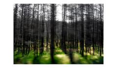 B o s q u e m a d o (creonte05) Tags: explore eduardomiranda flickr flickr2019 blur nikon d7100 2019 curico chile nature naturaleza icm ngc