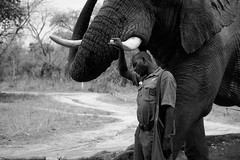 . (DEARTH !) Tags: africa krugernationalpark africanelephant safari travel elephants dearth elephant animals southafrica