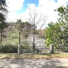 Fountain (LarryJay99 ) Tags: februarysky bluesky fountain westpalmbeach littlepond pond fence waterfeature