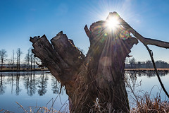 Winter sun 2588 (Peter Goll thx for +10.000.000 views) Tags: pond sun kairlindach winter himmel sonne weiher 2019 sky rad lake natur nature weisendorf bayern deutschland de seebachgrund gegenlicht reflektion reflection tree baum