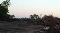 20190218_181433~2 (mshnaya ☺) Tags: woodland destruction construction development photo pic point shoot compact camera develop bulldoz land clear