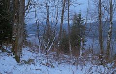 Snowy Forest (jvde) Tags: burnaby coolscan film fujicolor400 burrardinlet gimp nikonfe 3570mmf3345nikkor
