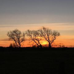 Sunset in Garstang [1552] (my.travels) Tags: sunset garstang england lancashire greatbritain unitedkingdom scenery trees tree iphone gb