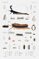Sea snail and sea slug varieties poster (Free Public Domain Illustrations by rawpixel) Tags: animal antique aquatic art augustus augustusaddisongould book cc0 collection conesnail conus cowrie cowry creativecommons0 creature decor decoration design drawing expedition flagcone free gastropod gould illustration images life marine mediterranean mollusc molluscashells mollusk name nautical northatlantic ocean old painting picture poster print publicdomain science scientific scientificexpeditions sea seaslug seasnail seafood set species vintage zoology