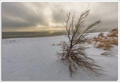 Sandy Hook (richpope) Tags: beach ocean waves sky clouds sun newjersey sandy hook gatewaynationalrecreationarea monmouthcounty atlanticocean sea nationalgeographic serene dreamy snow tree