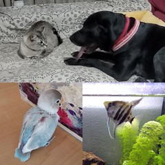 #mascotas #perro #dog #gato #cat #pajaro #agaporni #bird #peces #escalar #fishes #familiaanimal (r4uls4nchez) Tags: pajaro escalar perro gato peces familiaanimal cat bird mascotas agaporni dog fishes