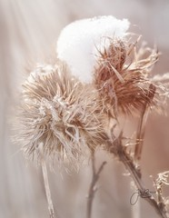 A little macro fun (Julie Brocca Photography) Tags: winter 365project 365photochallenge floral macrophotography macro