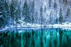 Enjoying the beauty of snow... (sylviafurrer) Tags: blausee berneroberland spiegelung tannen schnee snow firtree reflection blau blue winter switzerland