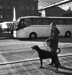 """Street Capture"" (giannipaoloziliani) Tags: italia italy sidewalk dark darkness hdr nikon nikoncamera nikonphotography fountain lightandshadow liguria bus shadows sunlight genova genoa piazzadeferrari place dog streetphotography"