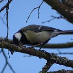 Bird thumbnail