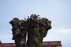 Trästoppar (rotabaga) Tags: sverige sweden göteborg gothenburg pentax k5
