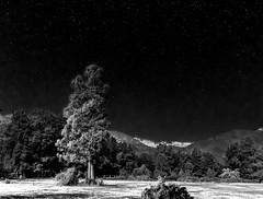 Las 7 tazas de noche, Molina, Chile (Mario Rivera Cayupi) Tags: naturaleza paisaje árboles bosque agua nature landscape trees forest water night noche stars estrellas bw blancoynegro parquenacional nationalpark sky tree blackandwhite