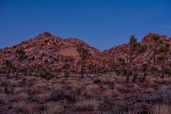 untitled (9 of 28).jpg (xen riggs) Tags: desert california joshuatreenationalpark february2018