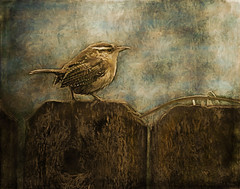 Wren On A Fence (ccliffb) Tags: bird textures topazimpression psfilters