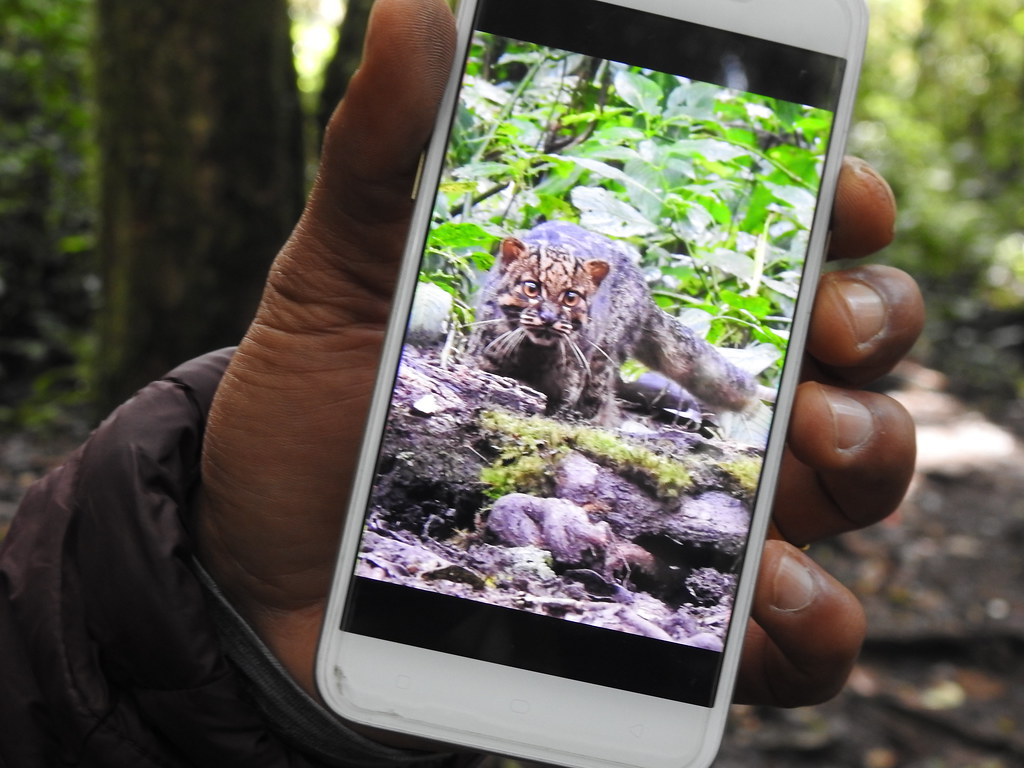The World's most recently posted photos of rainforest and