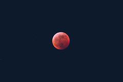 Super. Wolf. Blood. Moon. (crashmattb) Tags: superwolfbloodmooneclipse atlanta marietta georgia 2019 bloodmoon moon celestial astrophotography astronomy lunar lunareclipse eclipsedeluna lightroom canon70d canonefs55250f456isstm telephoto northamerica