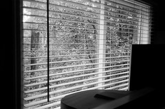 My bedroom window (Matthew Paul Argall) Tags: canonsnappy20 fixedfocus 35mmfilm blackandwhite blackandwhitefilm kentmere100 100isofilm window blinds