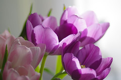 sunny bouquet (Krystian38) Tags: bouquet flowers tulips pink purple nature sun beauty pastel bright texture flower