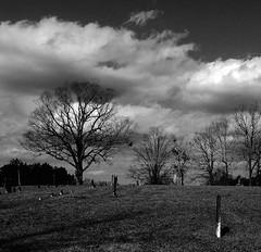 Tradesville SC (Just Back) Tags: death life sky winter oak grave cemetery cemetary stones hill tod cold quercus alba repose quiet rest rip cloud hiver enero funderburk burial