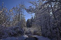 Schnee auf den Zweigen (Helmut Reichelt) Tags: zweige winterwald strase schatten wald schnee viel sonne winter februar schwaigwall oberbayern bavaria deutschland germany leica leicam typ240 captureone12 dxophotolab leicasummilux35mmf14asphii