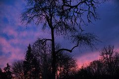 Sunset (Curtis Gregory Perry) Tags: lakeoswego oregon sunset sky purple pink cloud tree silhouette nikon d810 50mm f12 branches