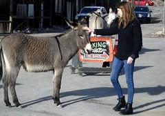 Friendly wild burro (thomasgorman1) Tags: burro animal town oatman arizona az street woman tourism travel tourist downtown historic streetshots candid streetphotos