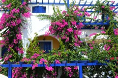 Una casa a Kamari (Santorini) (Valerio_D) Tags: santorini kamari καμάρι σαντορίνη κυκλάδεσ ελλάδα bouganville bouganvillea grecia greece 2018estate cicladi isolecicladi cyclades 1001nights