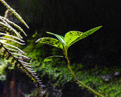 Caught in the Light (Steve Taylor (Photography)) Tags: black brown green grey newzealand nz southisland canterbury christchurch plant fern moss leaves damp