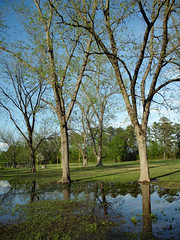 Flooding. (dccradio) Tags: lumberton nc northcarolina robesoncounty outdoor outdoors outside nature natural park citypark raymondbpenningtonathleticcomplex penningtonathleticcomplex northeastpark april weekend saturday saturdaynight saturdayevening evening goodevening spring springtime hp hewlettpackard hpdsccb350 tree trees treebranch branch branches treebranches treelimb treelimbs sky eveningsky flood flooding floodwater floooded