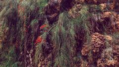 Shenzhen, old chinese garden (China) #23, 11-2018, (Vlad Meytin, vladsm.com) (Instagram: vlad.meytin) Tags: china khimporiumco meytin shenzhen vladmeytin ancient asia chinesegarden citygarden garden green oldgarden photography pictures plants vladsm vladsmcom 中国 中國 深圳 guangdong cn
