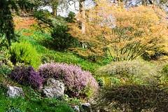 The Weir Garden Rockery (Macro light) Tags: nationaltrust the weir garden herefordshire hereford swainshill spring flowers trees japanese acer rockery