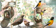 │T│L│C│'Feathered Squatters' @ Bloom until April 07 (- TRUE & LAUTLOS CREATIONS -) Tags: tlc tlchomecollection home collection │t│l│c│ prism event bloom sl second life secondlife 2019 feathered squatters animated animal bird spring