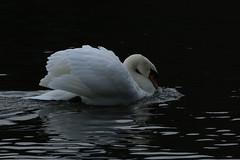 IMG_5098 (monika.carrie) Tags: monikacarrie wildlife scotland fyvie