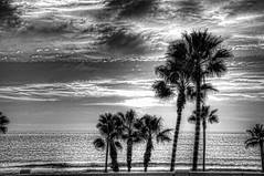 Palm Sunset B&W 9-1-11-19 (rod1691) Tags: sunset bw palms beach oceanside california