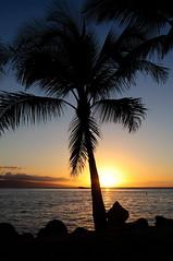 Hawaii (Shoot & Tell) Tags: mauihawaii