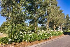 190127 174221 (Vibeke Friis) Tags: martinborough wellingtonregion newzealand nz